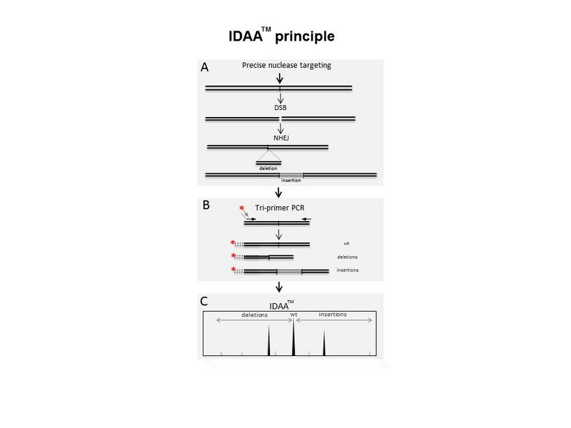 What is IDAA?