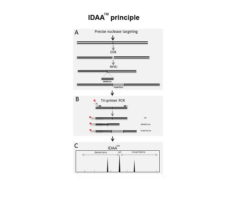 IDAA - Principle