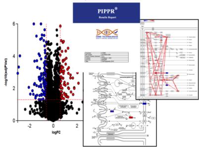 PIPPR Pathway Analysis